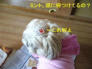 mint_20060606_1