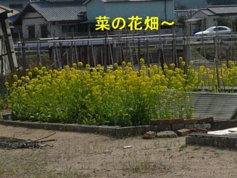 hana_20080329_1