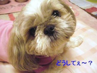 love_20060608_1