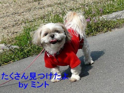 mint_20080329_2