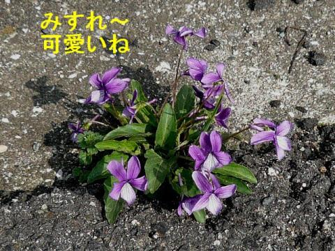 hana_20080329_2