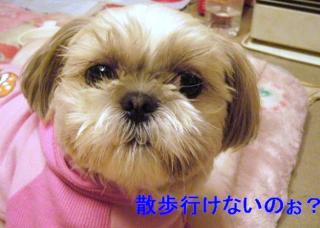 mint_20060608_1