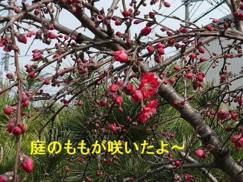 hana_20080329_3