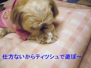 mint_20060608_2