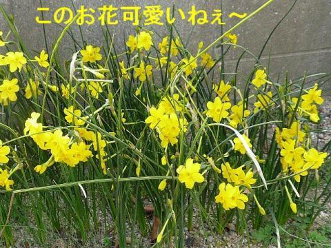 hana_20080329_4