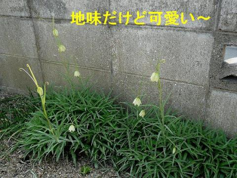 hana_20080329_5