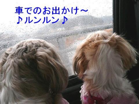 lovemint_20080330_1