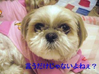 mint_20060609_1