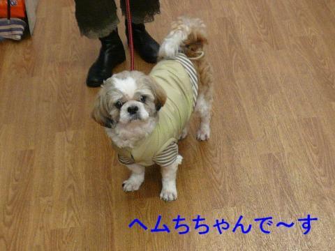 hemchan_20080330_1