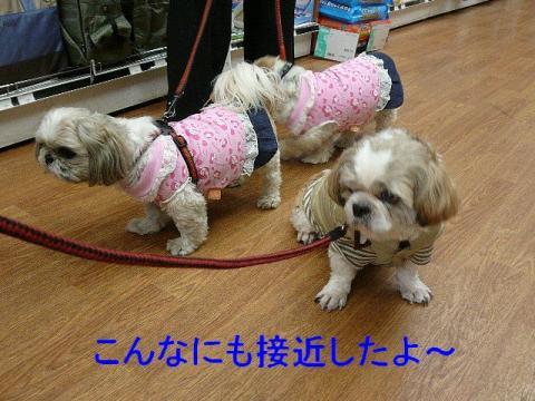 love_20080330_2