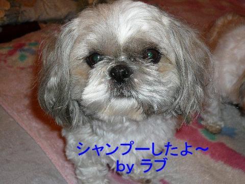 love_20080404_1