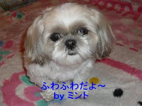 mint_20080404_1