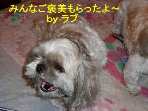 love_20080404_2