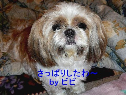 bibi_20080404_1