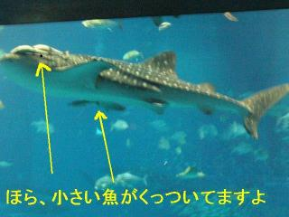 okinawa_6
