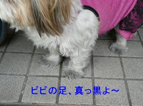 bibi_20080406_1