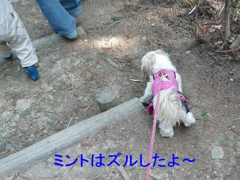mint_20080407_3