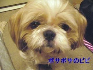 bibi_20060614_1
