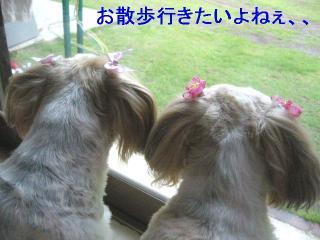 bibimint_20060617_2