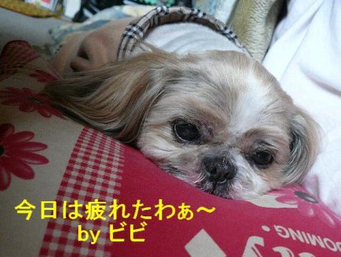 bibi_20080409_1