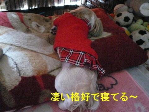 mint_20080409_1