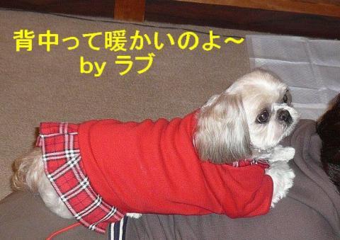 love_20080411_4