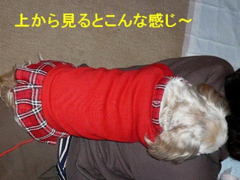 love_20080411_3