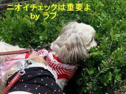 love_20080412_2