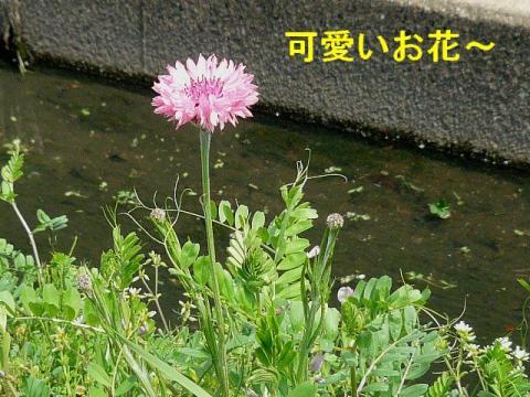 hana_20080412_1