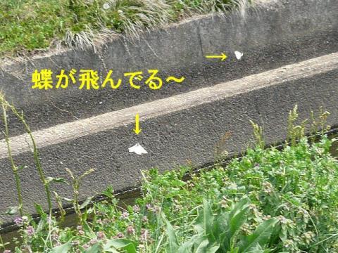 tori_20080412_1