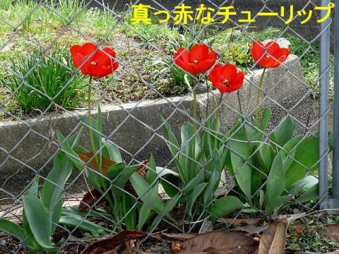hana_20080412_2