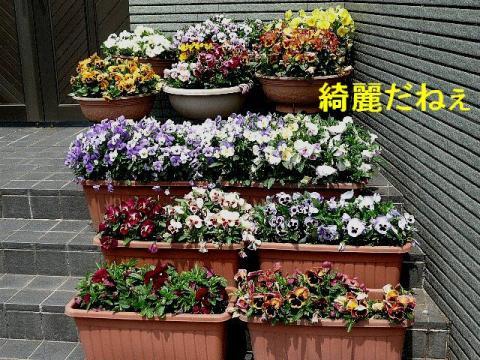 hana_20080412_4