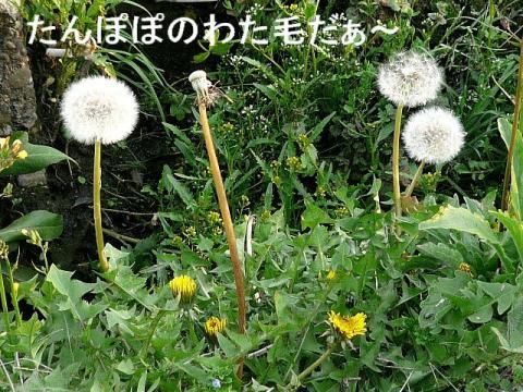 hana_20080412_3