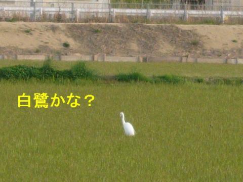 tori_20080412_2