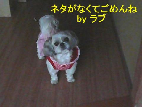 love_20080415_1