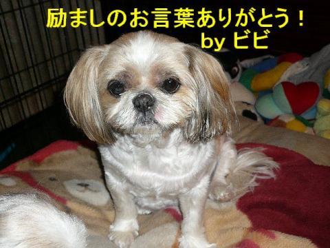 bibi_20080417_2