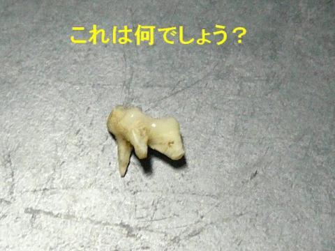 nani_20080417_1