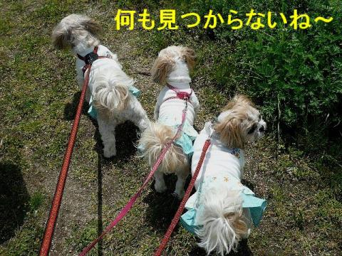 oyako_20080419_2