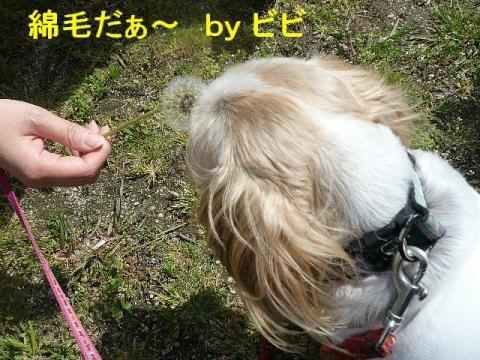 bibi_20080419_1