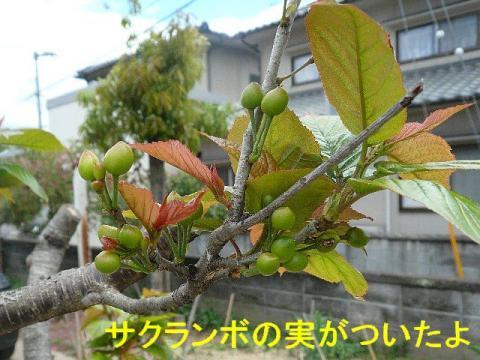 hana_20080419_3
