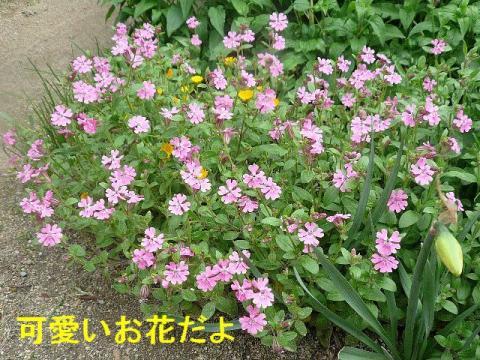 hana_20080419_1