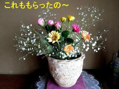 hana_20080419_6