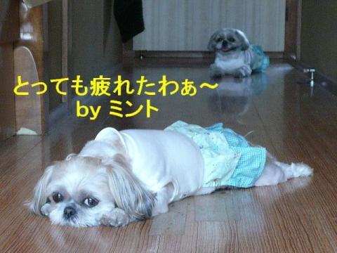 mint_20080421_1