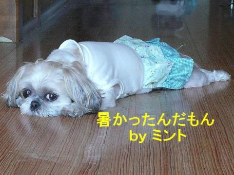 mint_20080421_2
