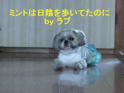 love_20080421_2