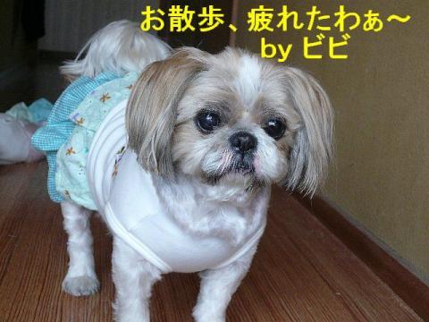 bibi_20080421_1