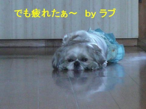 love_20080421_3