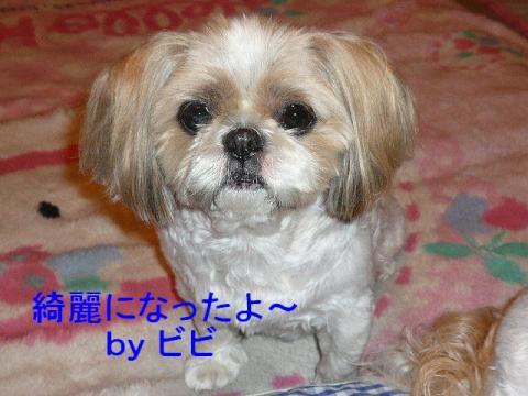 bibi_20080425_1
