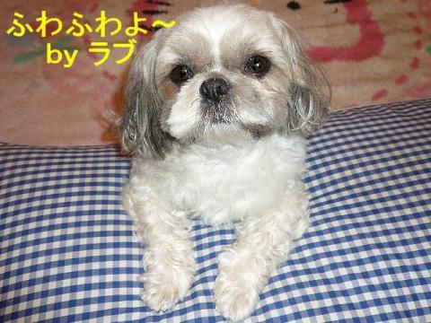 love_20080425_1