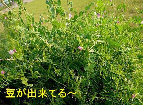 hana_20080426_4